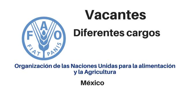 Vacantes diferentes cargos FAO