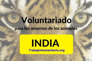 Voluntariado amante de animales India