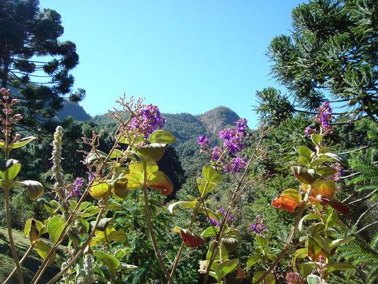 http://turismo.culturamix.com/blog/wp-content/uploads/2012/12/fauna-e-flora-foto.jpg