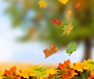 Resultado de imagem para Início do Outono