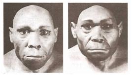 Uma das origens do homem, o Sinantropo e a Javantropo