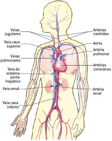 https://www.coladaweb.com/wp-content/uploads/2014/12/20170720-sistema-cardiovasculaar.png