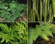 especies-comuns-de-pteridofitas-e-economia-1