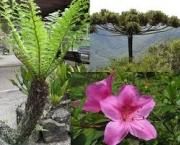 especies-comuns-de-pteridofitas-e-economia-2