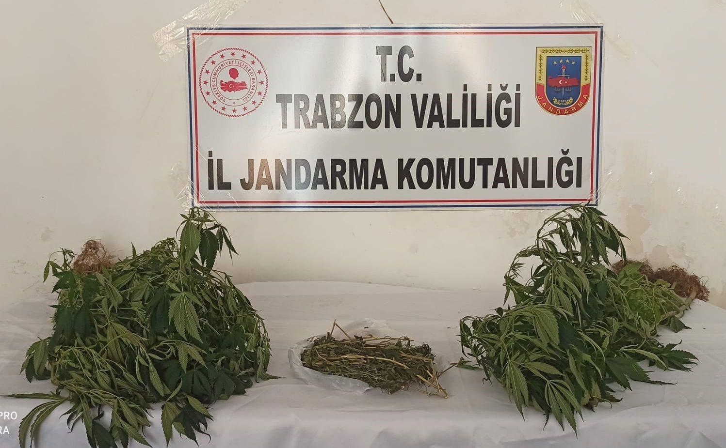 Trabzon'da 152 kök Hint keneviri ele geçirildi