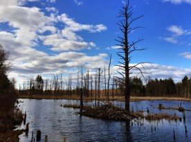 March - Lawrence Swamp, Amherst, MA