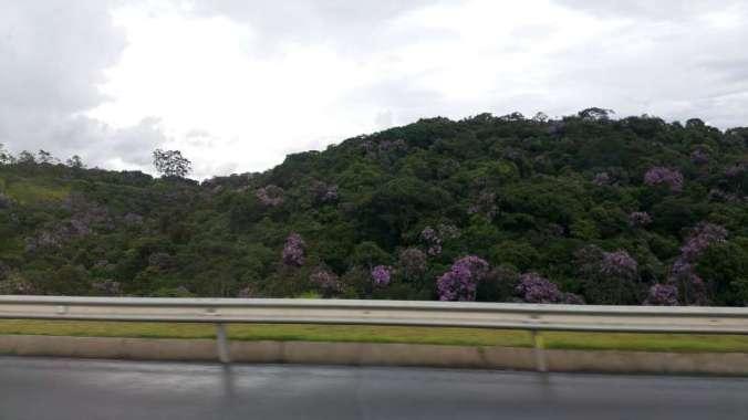 forêt de quaresmeira