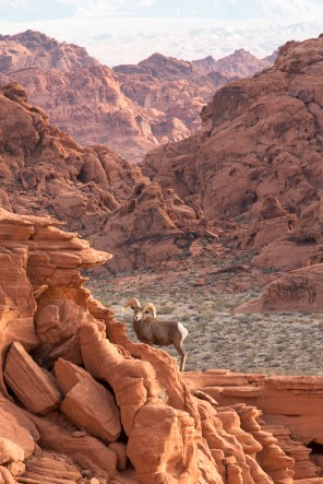 Valley of Fire State Park, AZ