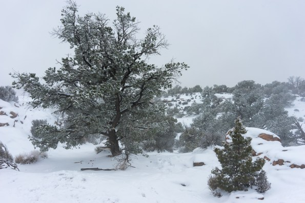 Canyonlands National Park, LB