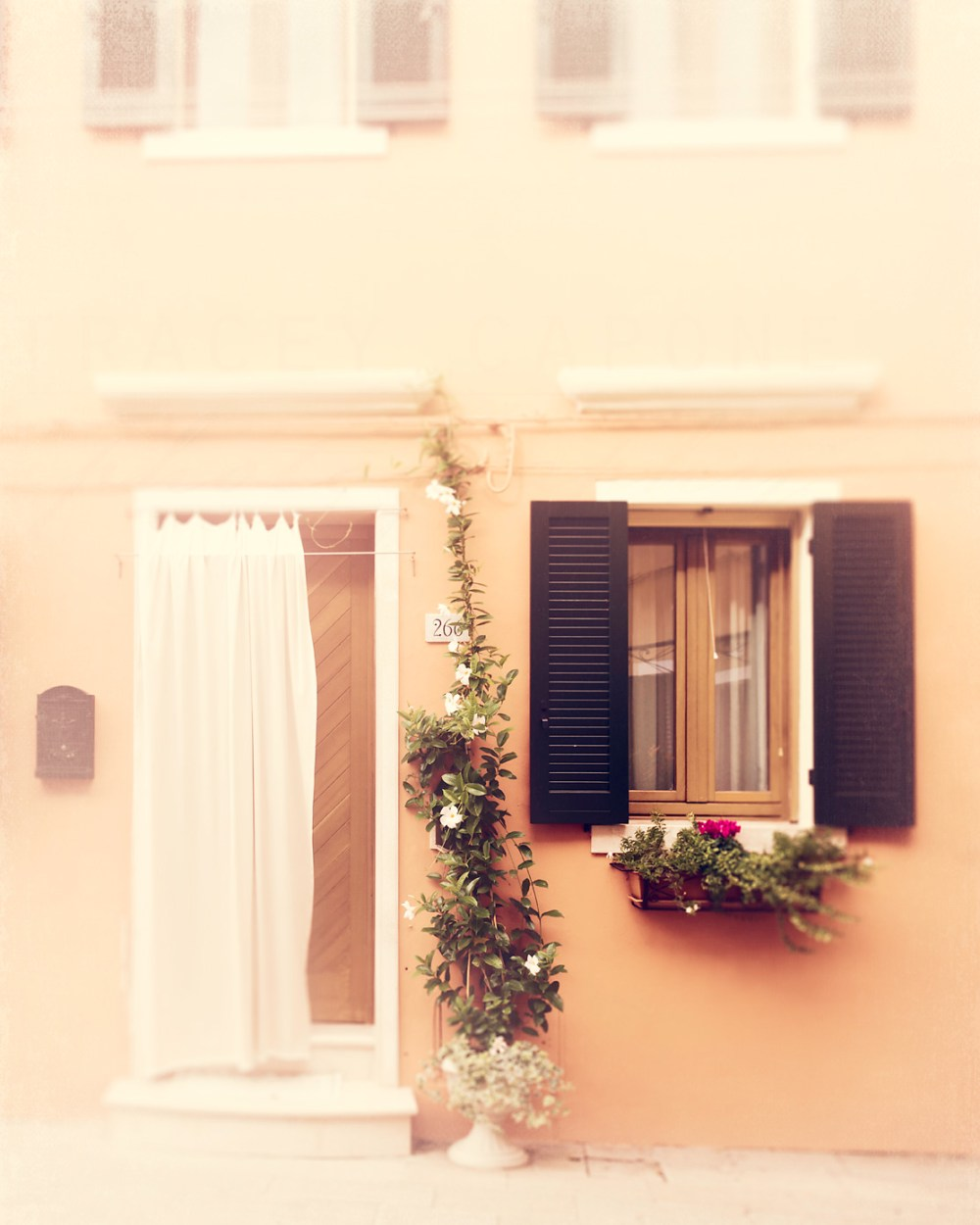 Peach colored home with climbing flowers and a white curtain on the island of Burano, Italy. Travel photography by Tracey Capone.