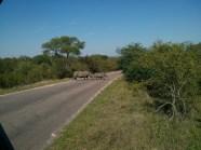 Rhino crossing!