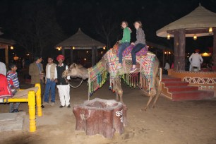 Look at me, I'm on a camel
