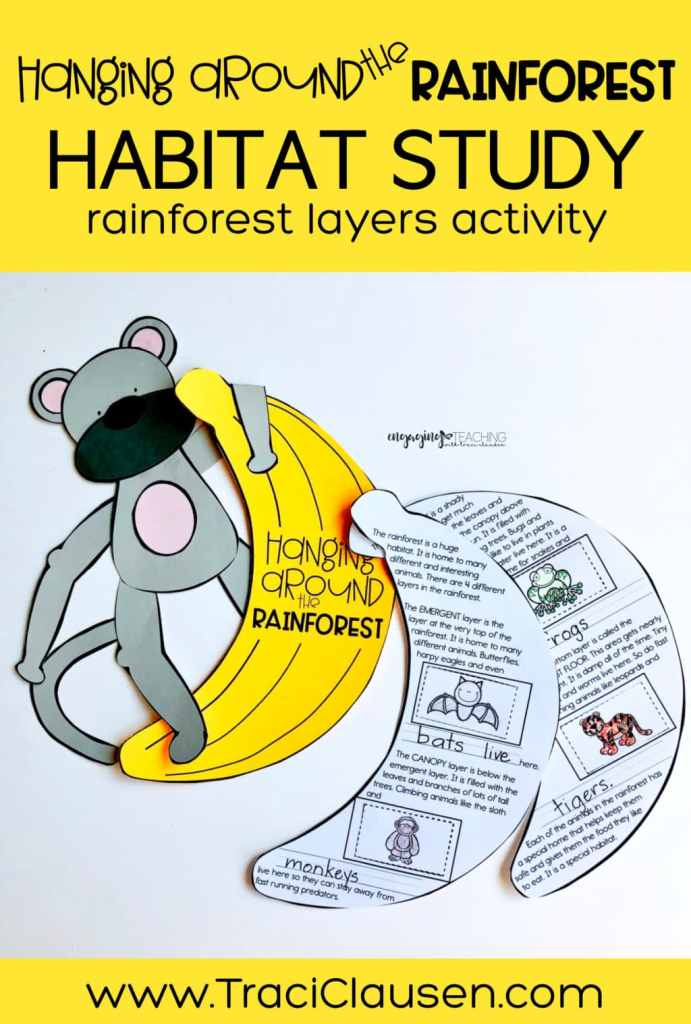 Monkey and Banana rainforest layers activity