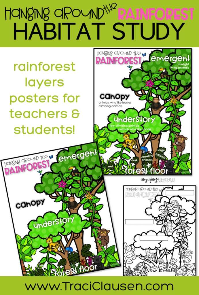 Rainforest Posters