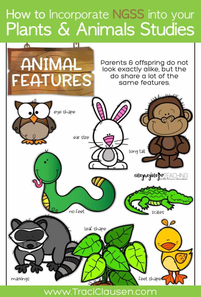 1st Grade Life Science NGSS Animal Features