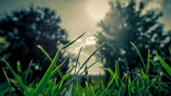 Grass Sun