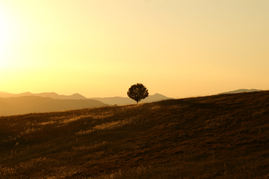 Scriptures on Loneliness | Tracie Braylock