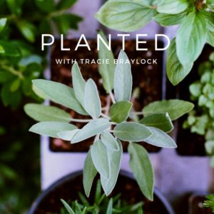 Planted Kit | Tracie Braylock
