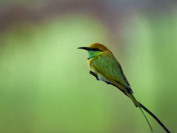 green-and-brown-bird-on-tree-branch-3834310