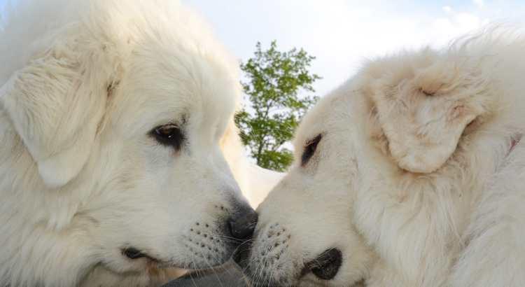 hunde haben schmetterlinge im Bauch