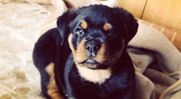 5 Dinge die man über Hunde wissen sollte_Beitragsbild
