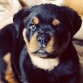 5 Dinge, die man über Hunde wissen sollte