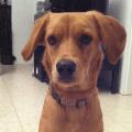 Eigentumsregeln des Hundes
