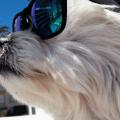 Urlaub mit Hund und GPS Gerät