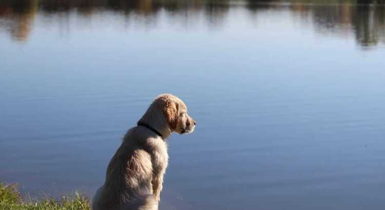 5 mistakes to avoid when introducing your dog to the water