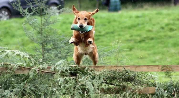 hyperactive dog - tractive blog