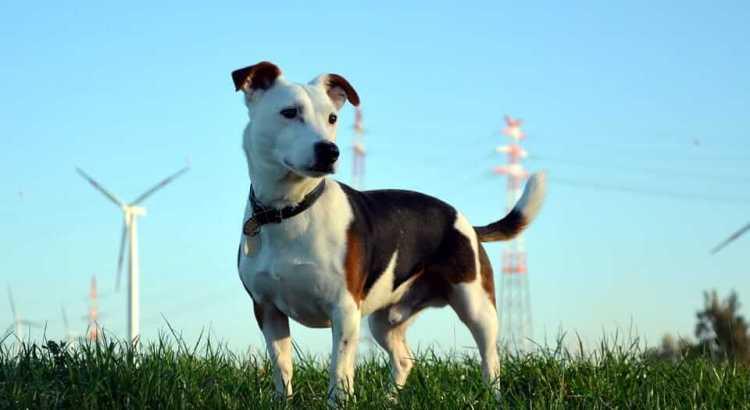 Hunting behavior in dogs