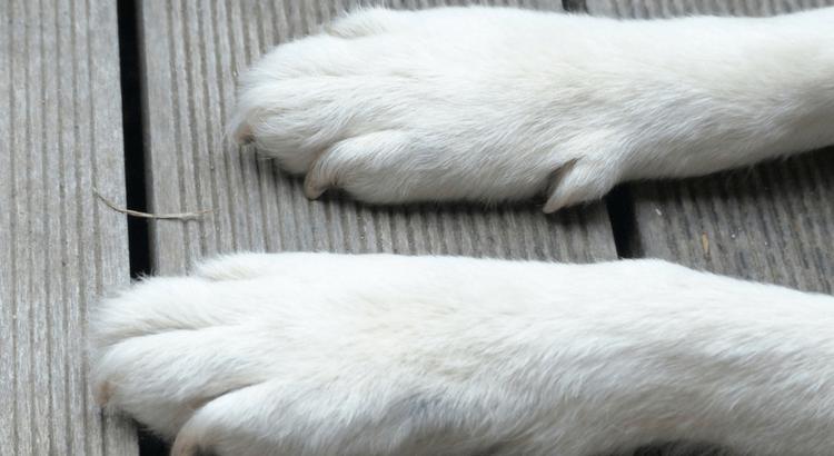 Hundepfoten vor Streusalz schützen