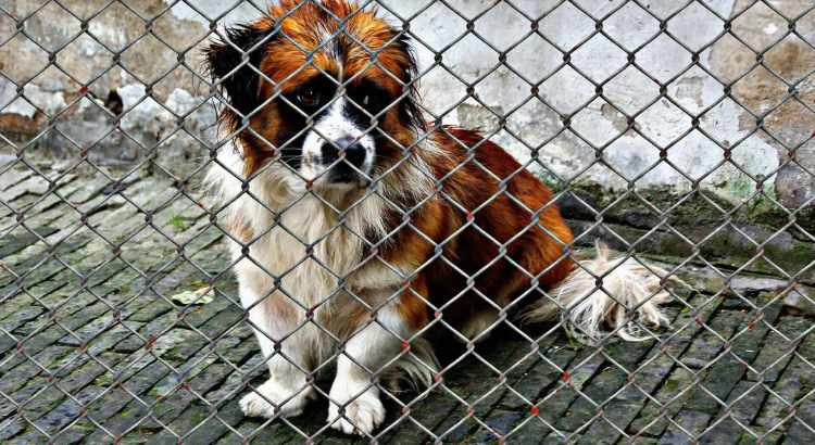 Ein Hund aus dem Tierheim