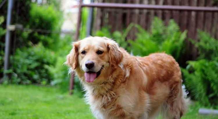Stressfreier Umzug mit Hund