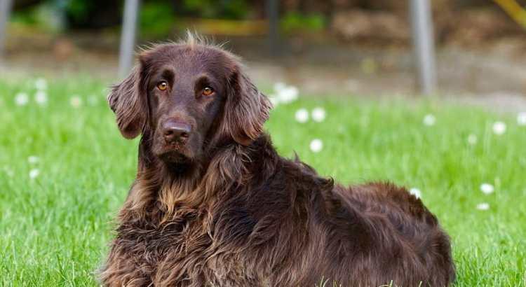 10 Cose che non sai sul tuo cane