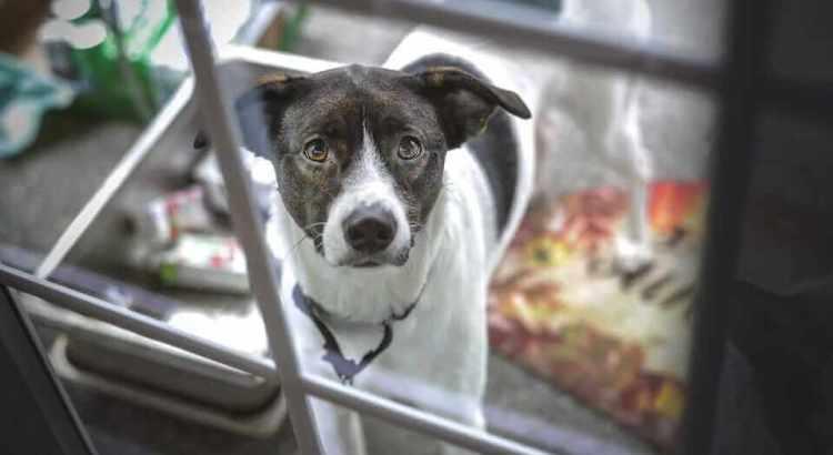 Sicherheit für Hunde im täglichen Leben