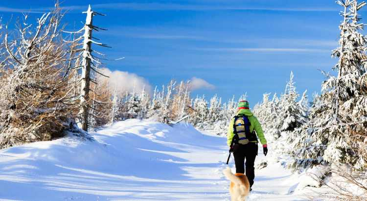 winter holiday with dogs