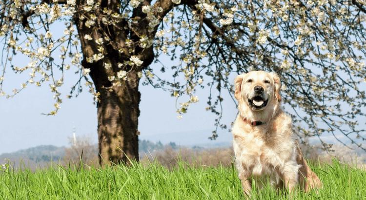 Fare conquiste con il cane