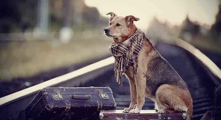 Umzug mit Tieren ins Ausland