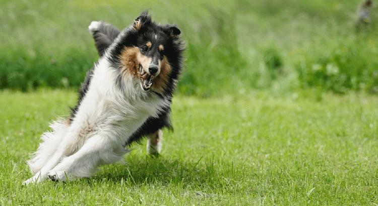 Di quanto esercizio ha bisogno un cane?