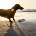 Hund verschwunden