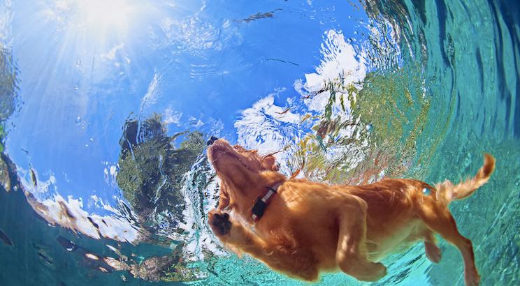 Hunderasse die Wasser liebt
