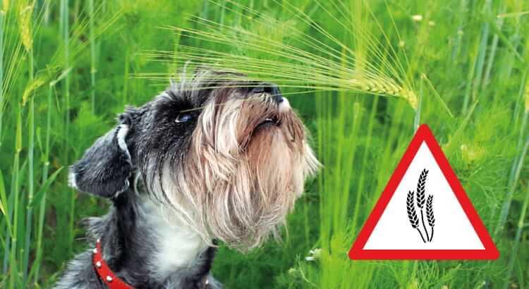 forasacchi pericolo mortale cane
