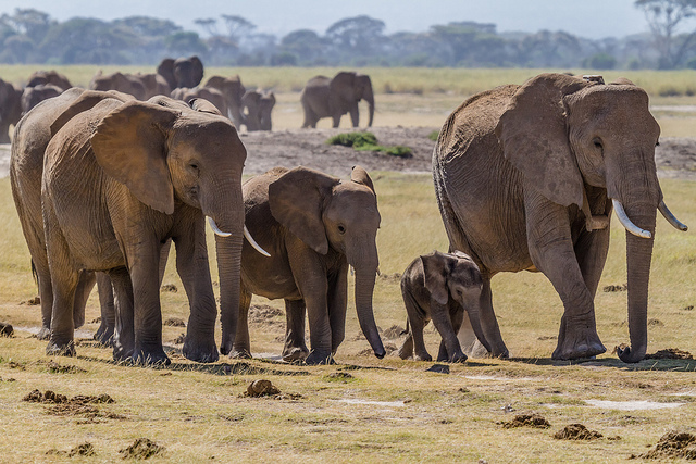 Elephant family in Kenya by Benh Lieu Song