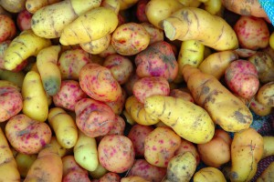 Ulluco tubers by Eric