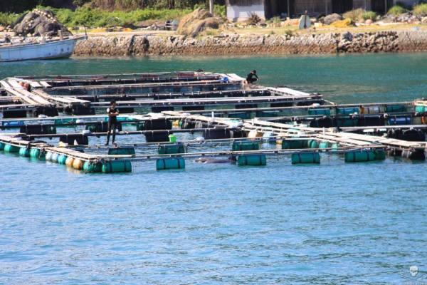 Guarding Taiji dolphins