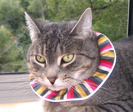 Emmy wearing Birdsbesafe cat collar