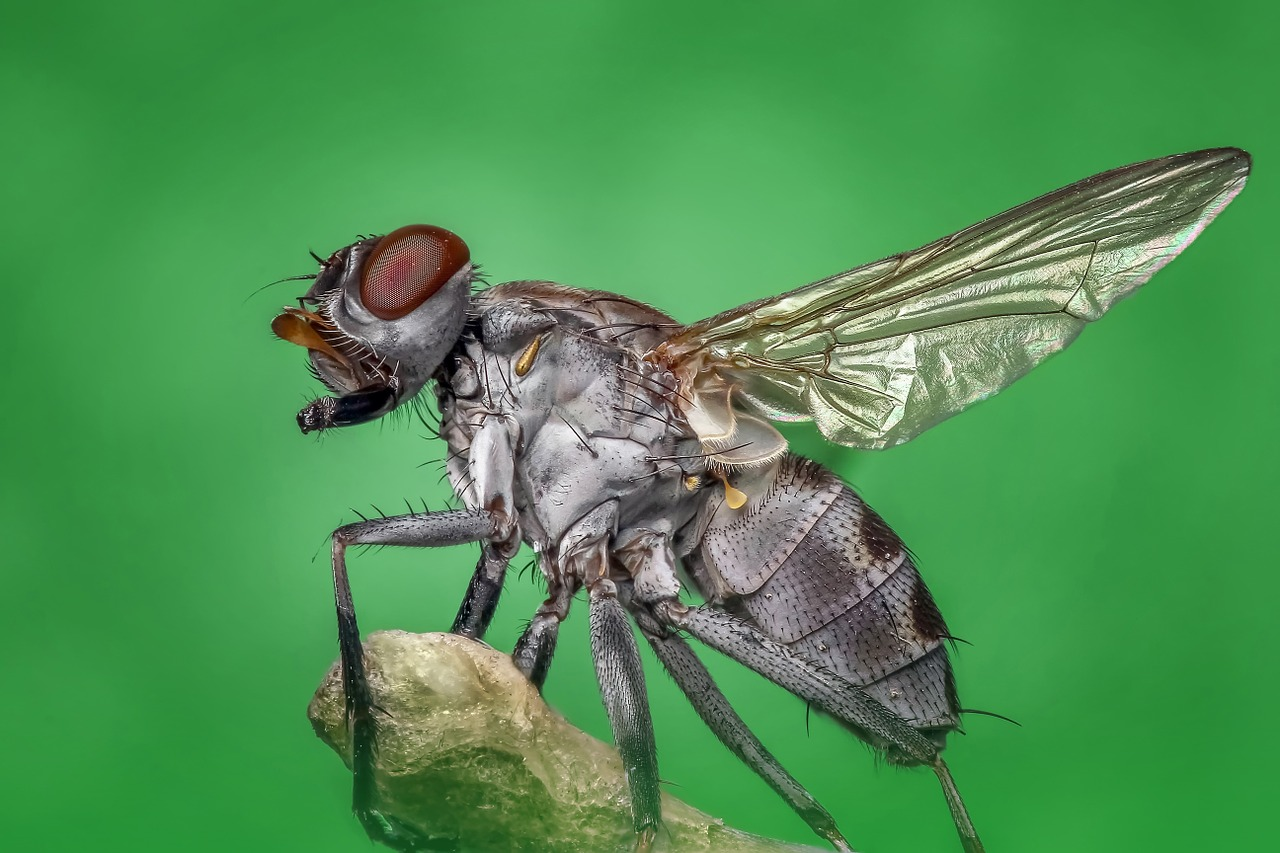 How watching a housefly can change your view - Tracy Brighten