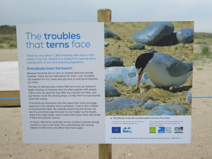 EULife Little Tern Recovery Project