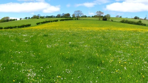 This year's meadows are simply dazzling